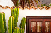 Cactus reaching rooftop — Stockfoto