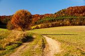 Golden Autumn in German countryside — Stock Photo