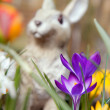 Crocus flowers and bunny sculpture — Stock Photo