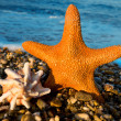 Sea star and shell by the sea — Stock Photo