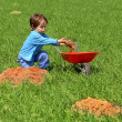 Stock Photo: Little boy loads wheelbarrow with earth