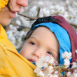 Mother and child in baby carrier enjoy sakura in bloom — Stock Photo #33812119