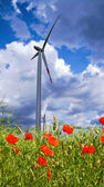 Poppy flowers, rape seeds, windmill on the background — Stock Photo