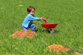 Little boy loads wheelbarrow with earth — Stock Photo