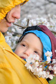 Mother and child in baby carrier enjoy sakura in bloom — Stock Photo
