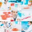 Cell culture work in the lab, collage — Foto Stock