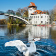 White Swan in Treptow Park, Berlin — Stock Photo