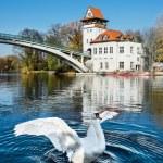 White Swan in Treptow Park, Berlin — Stock Photo