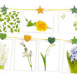Hanging postcards with spring flowers — Stock Photo