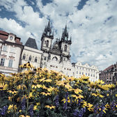 Yellow flowers on the main square in Prague  — Stock Photo