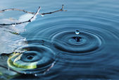 Rings on water surface  — Stock Photo