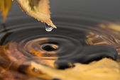 Water drops from a yellow leaf  — Stock Photo