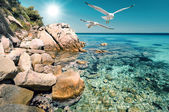 Seagulls over shallow water in Northern Greece  — Stock Photo