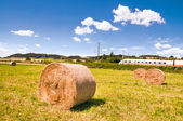Hay rolls on the field — Stock Photo
