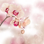 Orchids on neutral background — Stock Photo