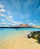 Wild seashore in Fuerteventura — Stock Photo