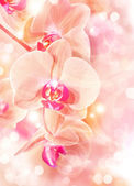 Yellow Phalaenopsis orchid — Stock Photo