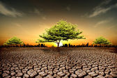 Drought land, plant struggling for life — Stock Photo