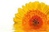 Flowerpower — Stockfoto
