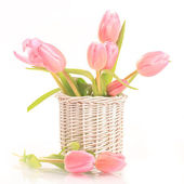 Tulip — Stock Photo