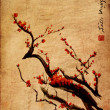 Sakura, cherry blossom plum chinese brush painting — Stock fotografie
