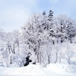 Forest cover with thick snow and sky — Stock Photo