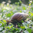 Snail on green bush — Stock fotografie