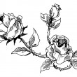 Roses vintage style drawing — Stock Photo #33971589