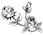 Roses vintage style drawing — Stock Photo