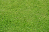 Green grass texture background — Stock Photo
