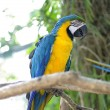 Stock Photo: Parrot macaw bird