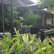 Tropical cafe terrace in the garden — Stock Photo #36029851