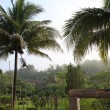 Farm in the morning sun with coconut tree — Stock Photo