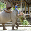 Stock Photo: Elephant farm in Thailand