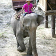 Elephant farm in Thailand — Stock Photo