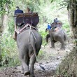 Stock Photo: Elephant riding in Thailand