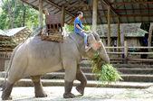 Elephant farm in Thailand — Foto de Stock