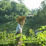 Scarecrow, straw man at the farm — Stock Photo #39957005