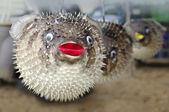 Stuffed blowfish selling in market — 图库照片