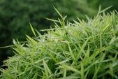 Bamboo bush with water — Stockfoto