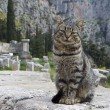 A cat in the Temple of Apollo at Delphi, Greece — Stock Photo
