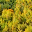 Beech Forest during Autumn — Stock Photo