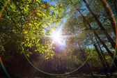 Sunlight through the autumn trees in the forest — Stock Photo