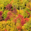 A colorful mountain scene on an autumn — Stock Photo