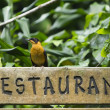Stock Photo: Bird sitting on restaurant sign