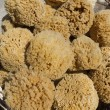 Stock Photo: Natural sponges