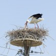 Two white storks in the nest on the elektrical pole blue sky (Ci — Stock Photo #43574609