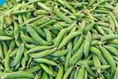 Close up of fresh sugar snap peas — 图库照片