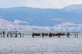Aquaculture of mussels in Thermaikos Gulf, Greece, Europe — Stock Photo