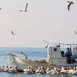 Fishing Boat and the fisherman surrounded by seagulls and pelica — Stock Photo #46557047